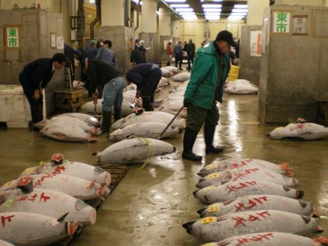 Subasta atun Tsukiji